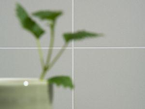 Fibo Nachhaltigkeit