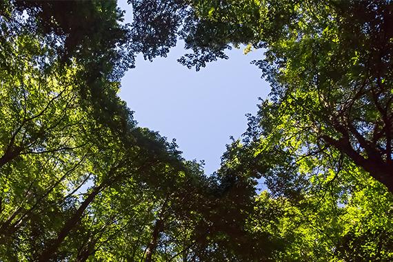 Bäume, die mit ihren gemeinsamen Kronen ein Herz formen